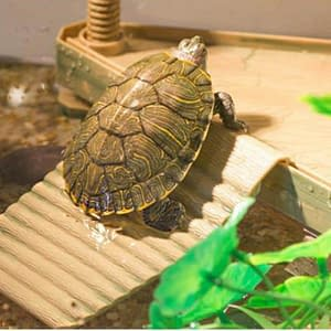 Reptile Turtle Basking Multi-Functional Habitat Decor