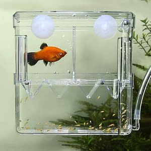 Fish Breeding Box/Shrimp Hatchery/Isolation Feeding Box for Aquarium