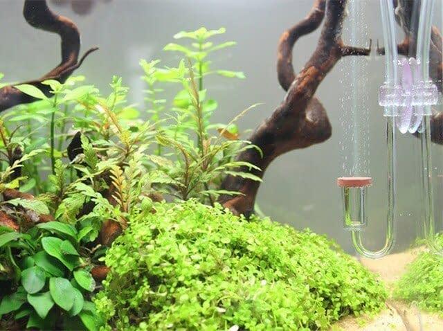 mini tekanan rendah jelas diffuser air kecil tanaman tangki tak terlihat penyemprot ukuran kecil efisiensi