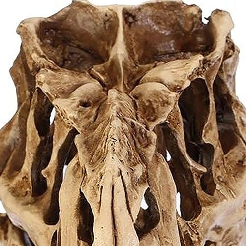 Resin Dinosaur Skull Fossil Model