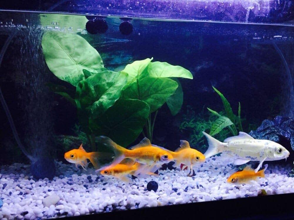 Aquarium Bio Balls Media