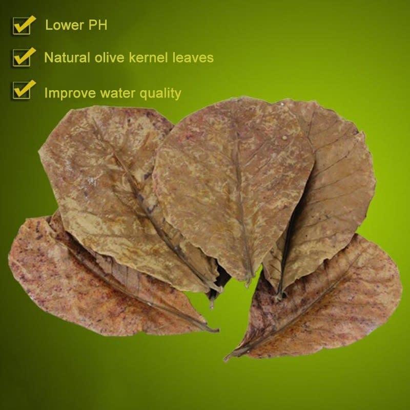 Natural Terminalia Catappa Foetida Leaves