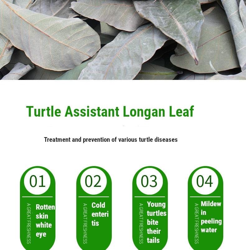 Natural Dimocarpus Longan Leaves